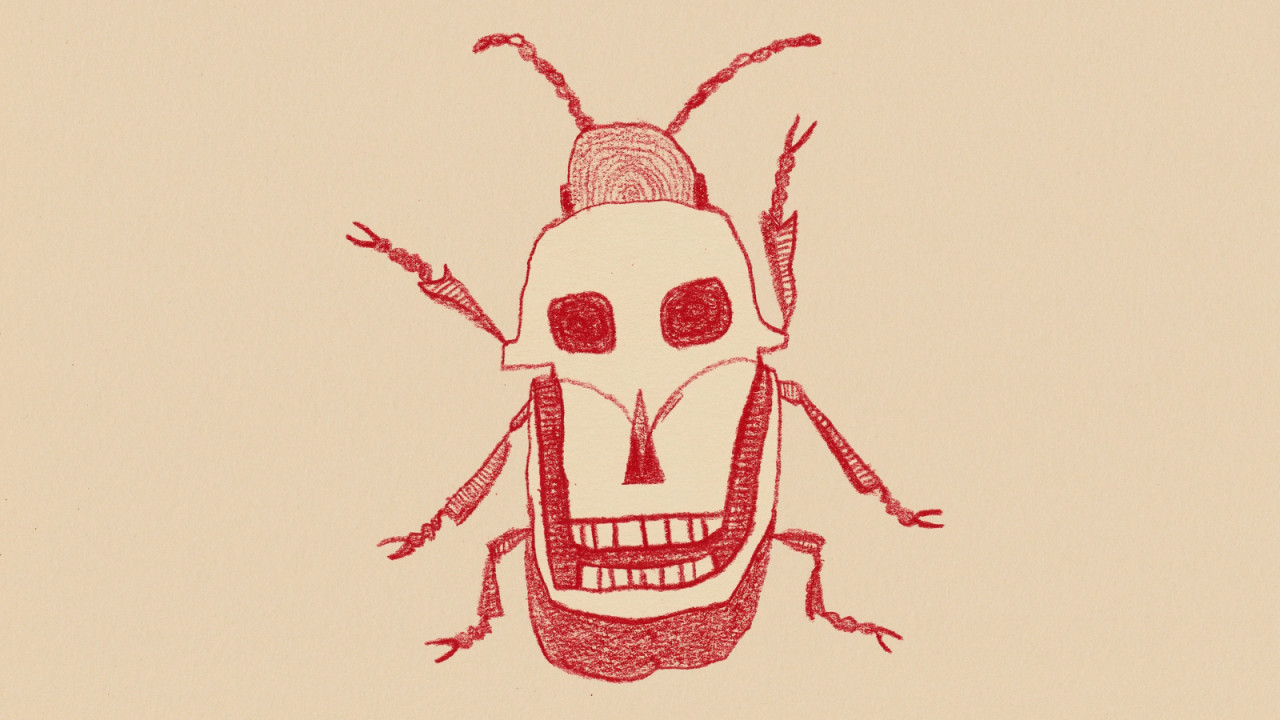 Beetle trouble - 4